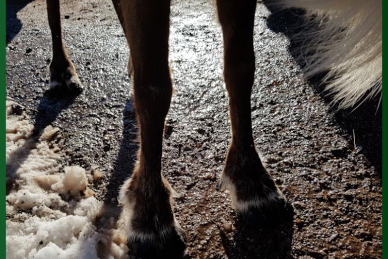 Rudolph and Co – a detour to Scandinavia
