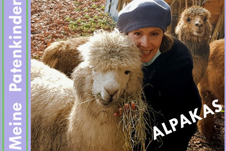 Alpacas – From the Andes to the Odenwald